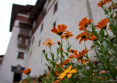 Bhutan orange flowers
