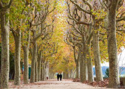 Coimbra - Trees