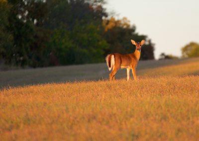 Deer NJ