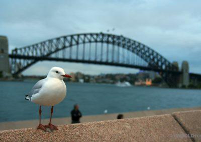 Sydney Harbour_11